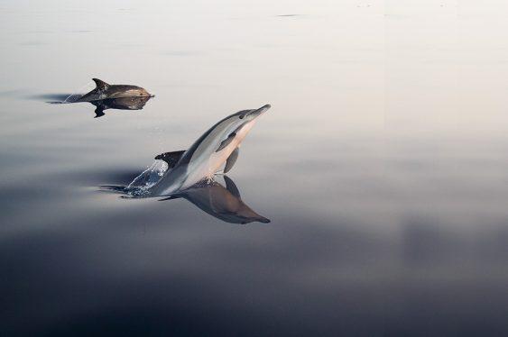 Fotos de delfines en el mar de Alborán