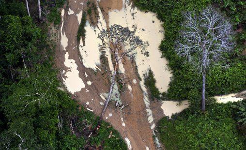 Imagen de: Brasil:  madera de sangre
