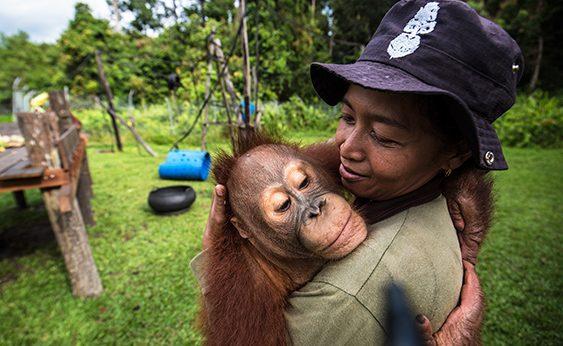Una cuidadora abraza a un orangután en Borneo.