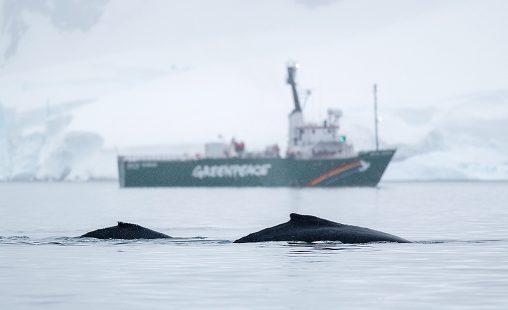 Una ballena jorobada con una cría frente al barco Arctic Sunrise en Paradise Bay, en el archipiélago de Palmer, en la Península Antártica