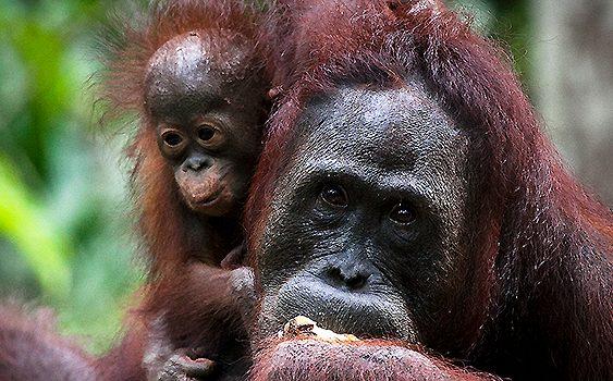 Ganan las selvas, pierde la impunidad