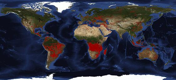 Los incendios forestales arrasan el planeta
