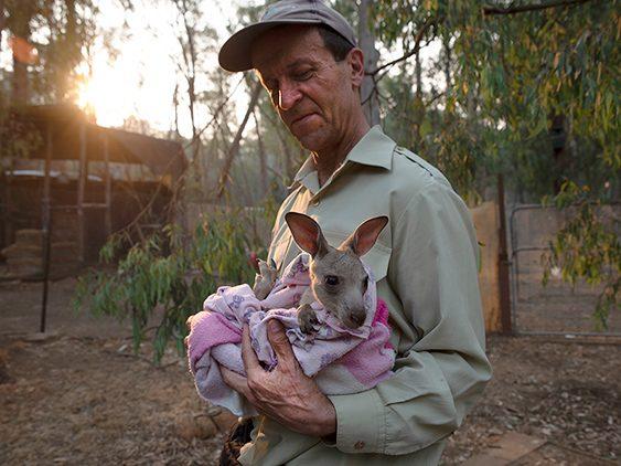 Hombre ayudando a un canguro tras los incendios