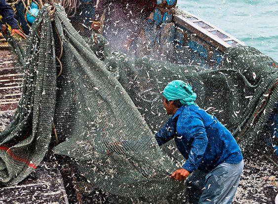 Denunciar irregularidades pesqueras: peligro de muerte